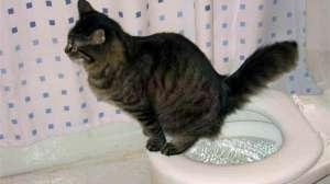 猫咪便秘症状及防治方法